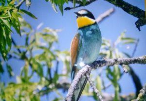 birding lleida, turisme ornitologic