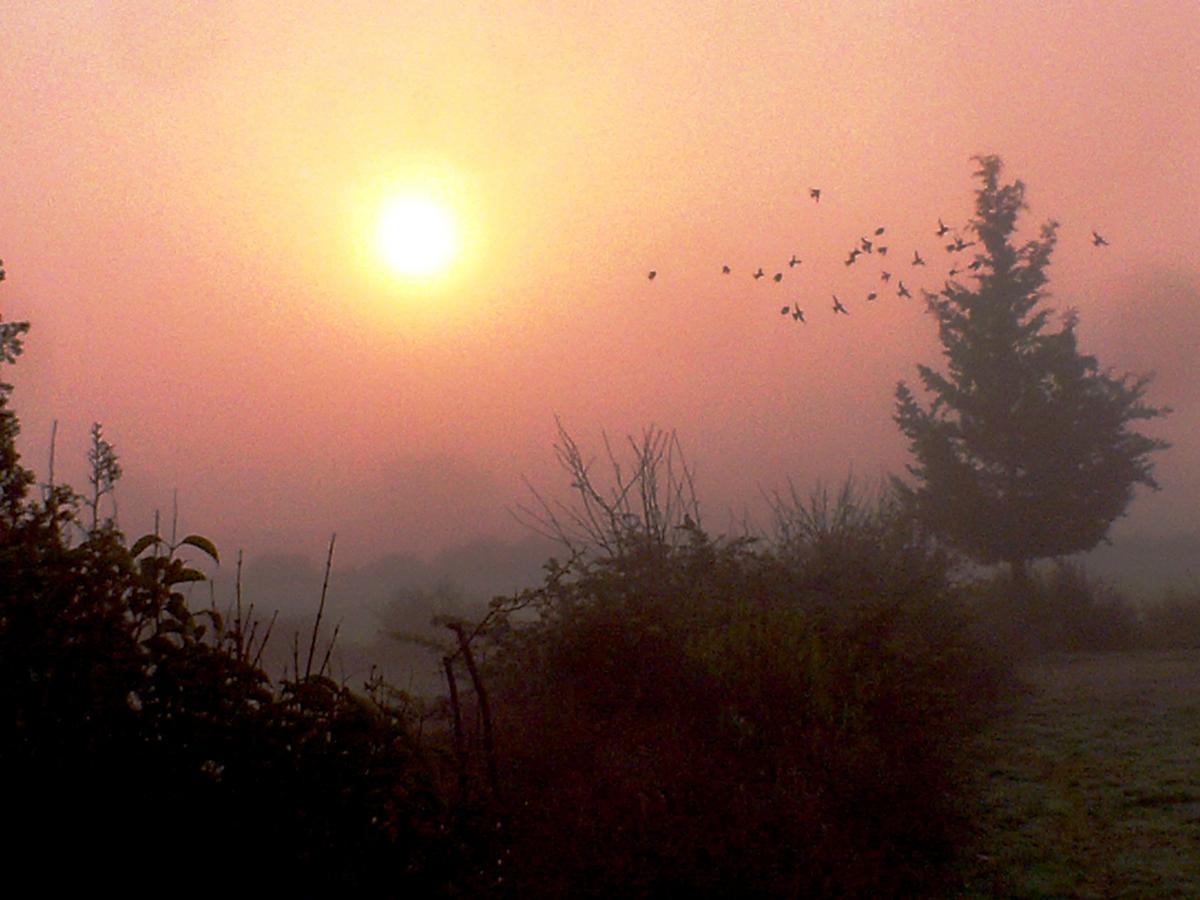 Temps de boires i ocells